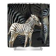 Sunny Zebra Shower Curtain