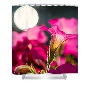 Sunrise 1 - Featured 3 Shower Curtain
