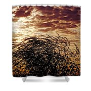 Sunrise And Lacy  Tree Shower Curtain