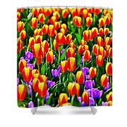 Sunrise And Lavendar Shower Curtain