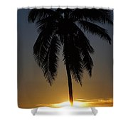Sunrise And Palm Tree Shower Curtain