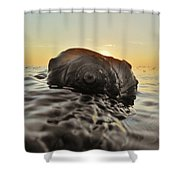 Sunrise Conch 9 10/3 Shower Curtain