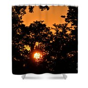 Sunrise In The Forest Shower Curtain