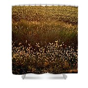 Sunrise On Wild Grass Shower Curtain