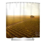 Sunrise Over The Vineyard Shower Curtain