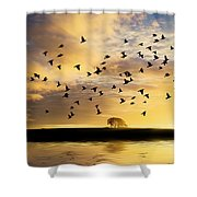 Birds Awaken At Sunrise Shower Curtain