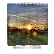 Sunrise Through Grass Shower Curtain
