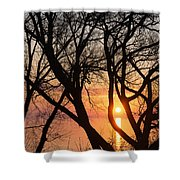 Sunrise Through The Chaos Of Willow Branches Shower Curtain