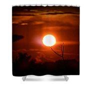 Sunset - Stuck On Tree Branch Shower Curtain