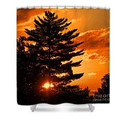 Sunset And Pine Tree  Shower Curtain
