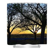 Sunset And Trees Shower Curtain