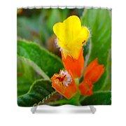 Sunset Bells Flower Shower Curtain