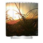 Sunset Grass 1 Shower Curtain