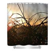 Sunset Grass 2 Shower Curtain