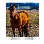 Sunset Bay Horse Heber Valley Utah Shower Curtain