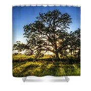 Sunset Oak Shower Curtain