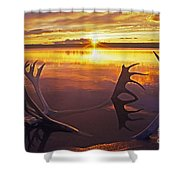 Sunset On Caribou Antlers In Whitefish Lake Shower Curtain