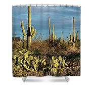 Sunset On The Saguaros Shower Curtain by Sandra Bronstein