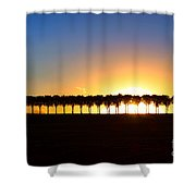 Sunset Over Tree Lined Road Shower Curtain