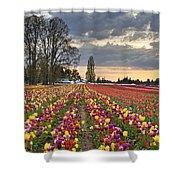 Sunset Over Tulip Flower Farm In Springtime Shower Curtain