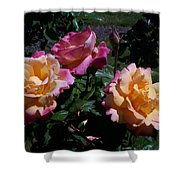 Sunset Painted In Roses Shower Curtain