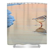 Sunset Piping Plover Shower Curtain