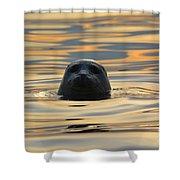 Sunset Seal Shower Curtain