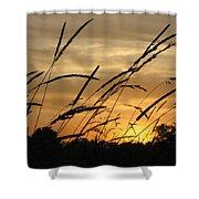 Sunset Sentinels Shower Curtain