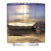 Sunset Shells Shower Curtain