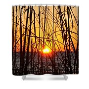 Sunset Through Grasses Shower Curtain