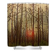 Sunset Thru The Pine Barrens Shower Curtain