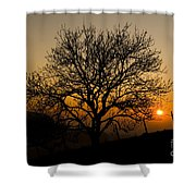 Sunset Tree Shower Curtain by Anne Gilbert