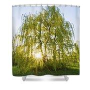 Sunset Willow Shower Curtain