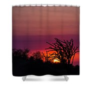 Sunset With Octopus Tree Shower Curtain