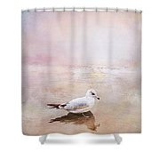 Sunset With Young Seagull Shower Curtain