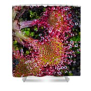 Sundew Shower Curtain