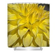 Sunshine Dahlia Shower Curtain