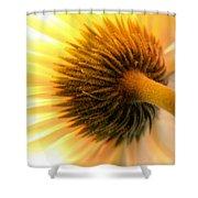 Sunshine Daisy Shower Curtain