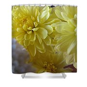 flower - Sunshine in Petals Shower Curtain