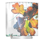 Sunshine Leaves Shower Curtain