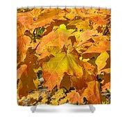 Sunshine Of Fall Shower Curtain