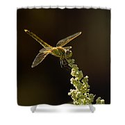 Sunshine On A Landed Dragonfly. Shower Curtain