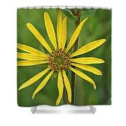Sunshine On A Stem Shower Curtain
