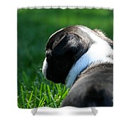 Sunshine On My Shoulders Shower Curtain