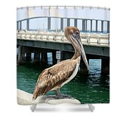 Sunshine Skyway And Pelican Shower Curtain