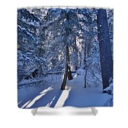 Sunshine Through Winter Trees Shower Curtain