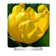 Sunshine Tulip Shower Curtain
