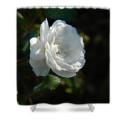 Sunshine White Rose Shower Curtain