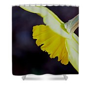 Sunshine Yellow Daffodil Shower Curtain