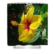 Sunshine Yellow Hibiscus With Red Throat Shower Curtain